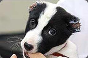 CFAWR   Animal Cruelty Syndrome